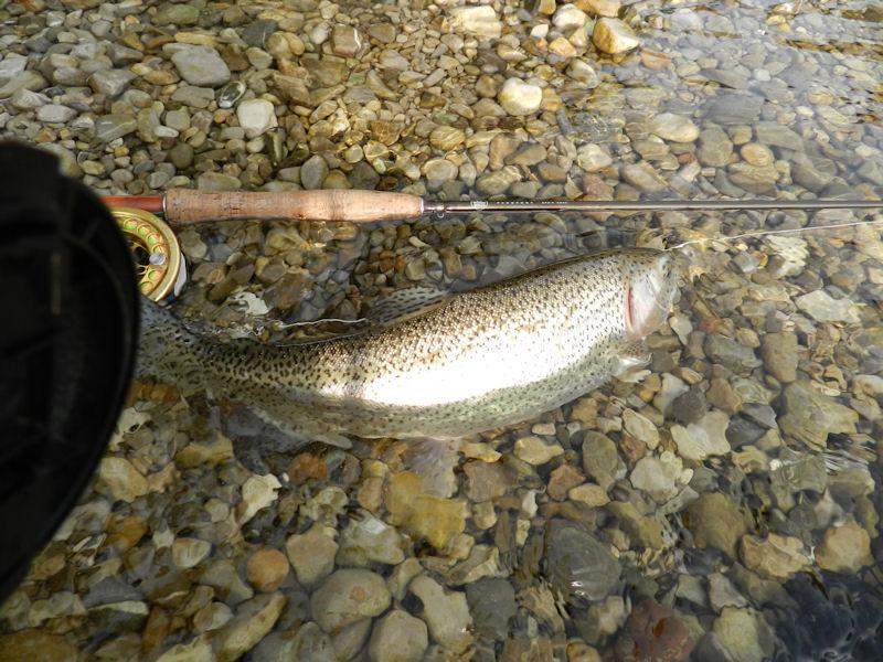 fisch betäuben und töten