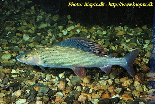 fortpflanzung fische klasse 5
